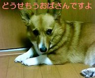 200808120022001_3