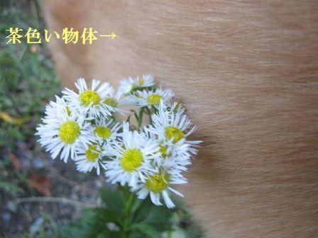 Img_6500_2