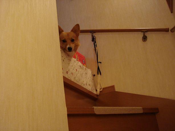 下に降りたいよ~