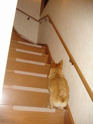 階段を上がるすず