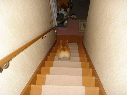 階段を降りるすず