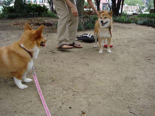 やまと君と公園で